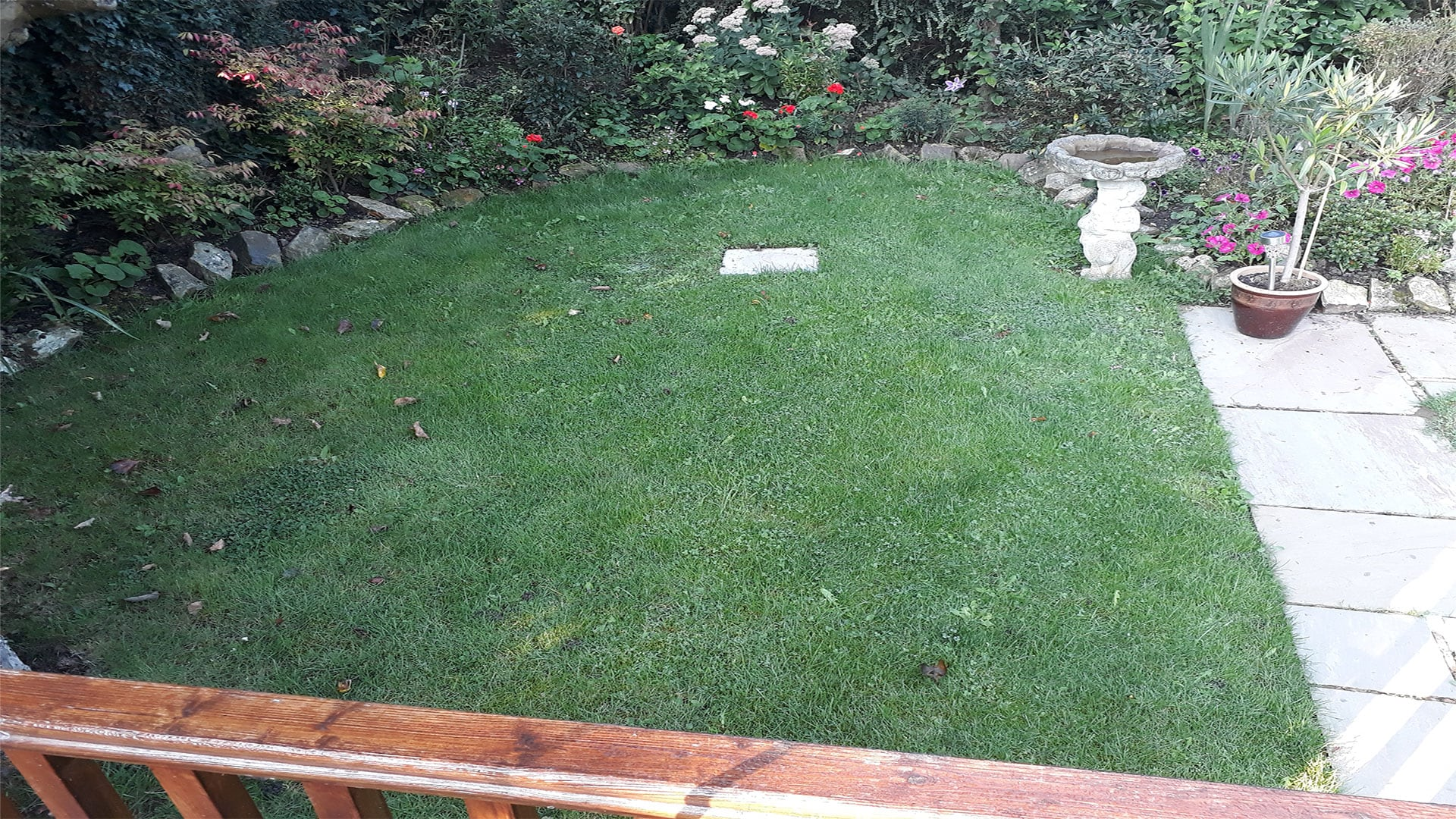 Before Photo of Existing Grass